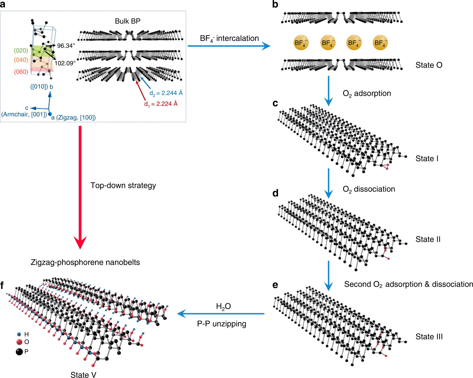 图2  电化学解离黑磷晶体形成锯齿取向黑磷烯纳米带(z-PNB)的机理