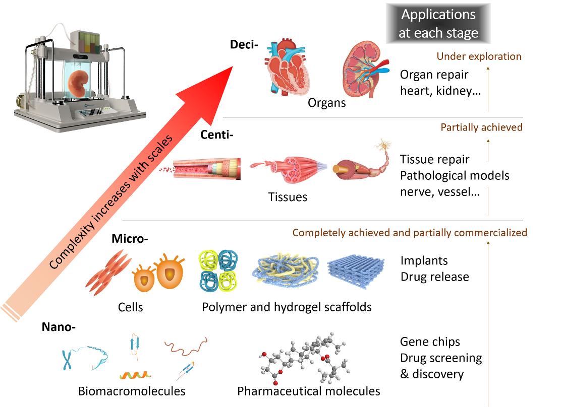 图3  生物3D打印的发展路径图