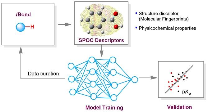 图1  pKa全局预测模型构筑流程