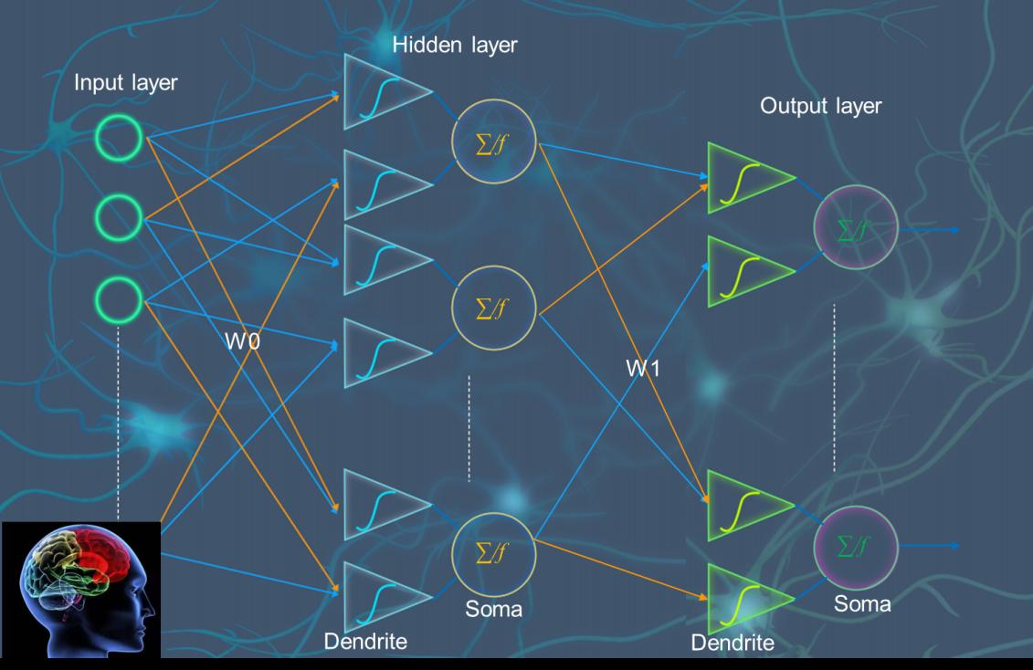 包含树突计算的新型人工神经网络示意图