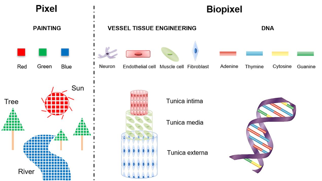 """图2  传统印刷像素和""""生物像素""""类比示意图"""