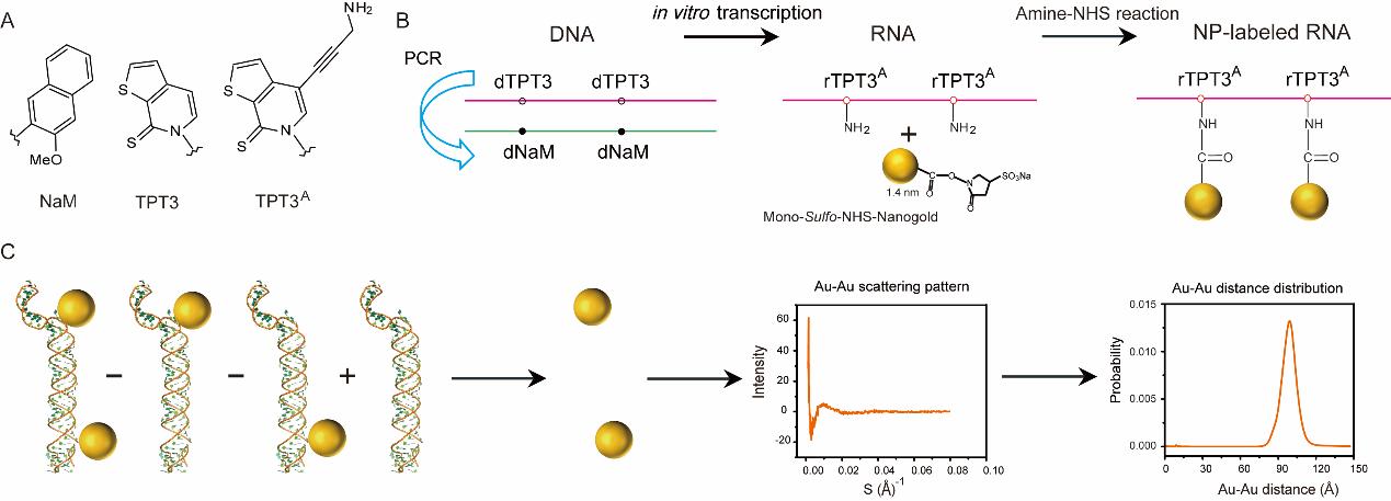 长链RNA位点特异性共价标记金纳米颗粒的新技术及其应用